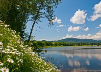 Rybník Olšina